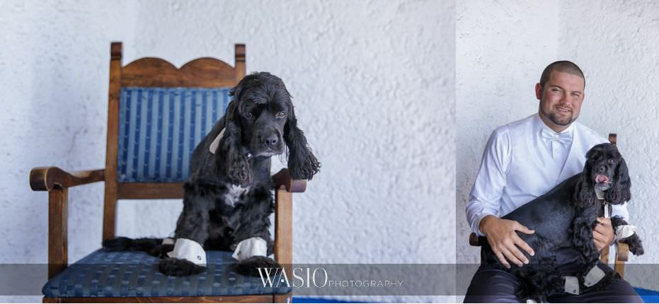 Las-Rocas-Resort-Rosarito-Wedding-cocker-spaniel-puppy-ring-dog-groom-portrait-best-man-21 Las Rocas Resort Rosarito Wedding - Meaghan and Eric
