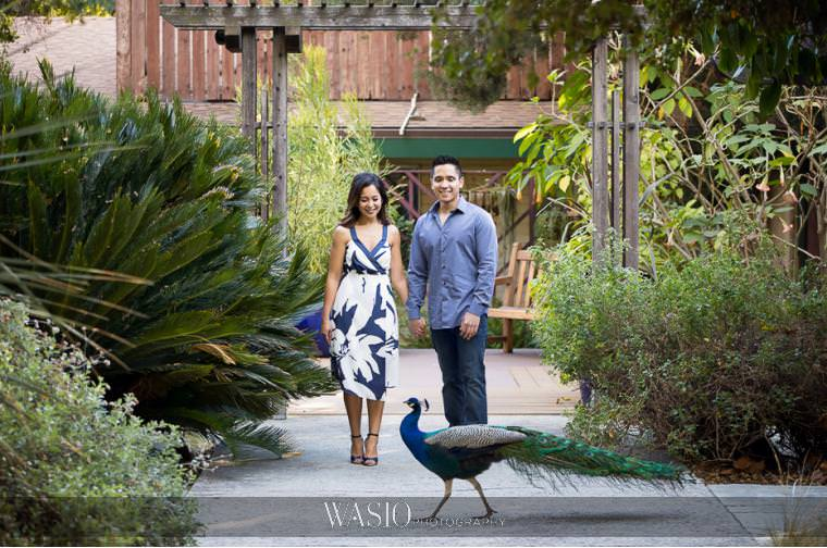 Los-Angeles-Arboretum-Engagement-peacock-botanic-garden-engaged-pictures-San-Diego-70 Los Angeles Arboretum Engagement - Armi and Omar