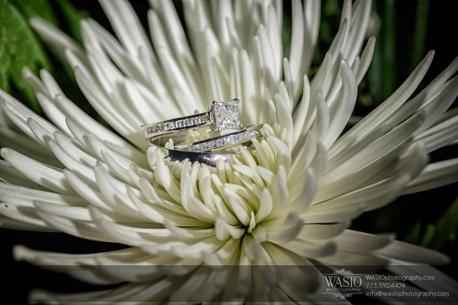 WASIO-Chicago-Wedding-Photography-0037-wedding-rings-detail-flower-931x620 Cantigny Park Wedding - Danielle+David