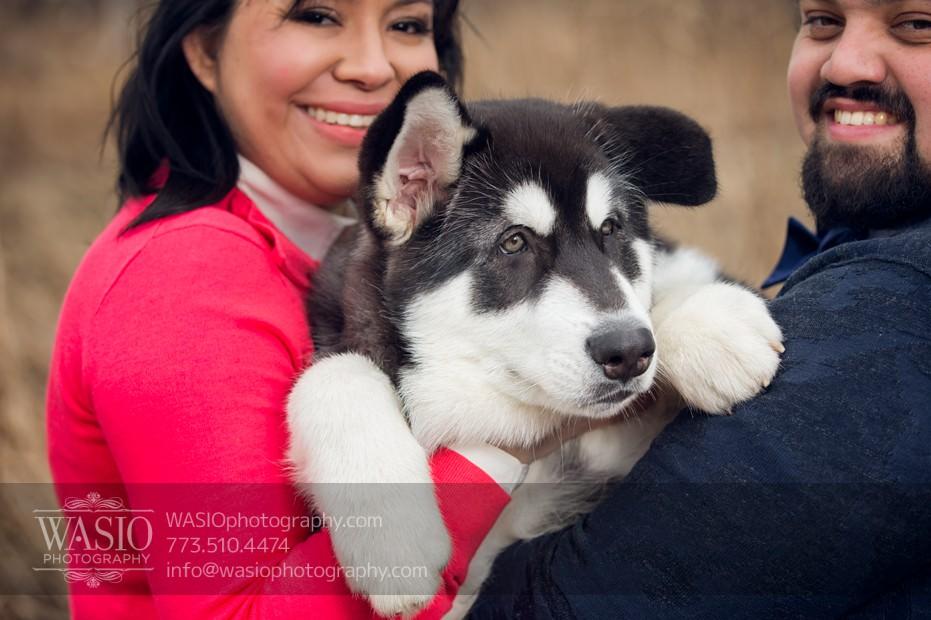 annie-jason-5 The Cutest Alaskan Malamute Puppy Session
