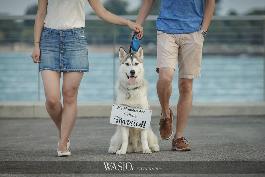 the-knot-best-of-weddings-hall-of-fame-engagement-evanston-puppy-husky-chicago-photography-blog-1 The Knot Best of Weddings Hall of Fame - WASIO Photography